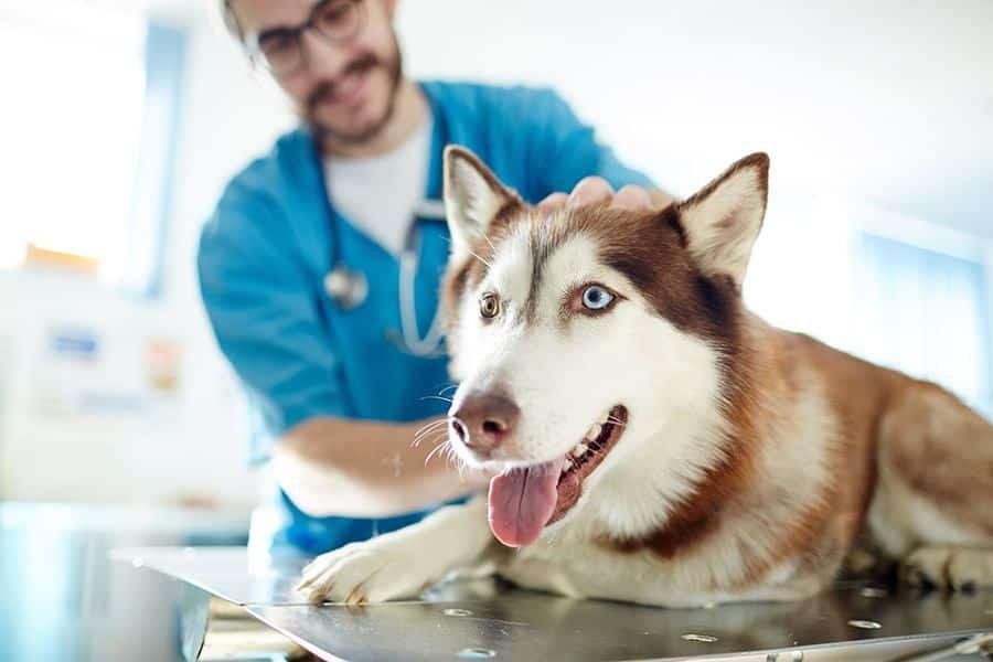 hond-bij-de-dierenarts